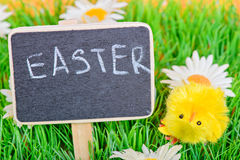 Easter chicken with chalkboard Stock Photo