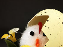 Easter chicken coming out of the egg. Royalty Free Stock Photography