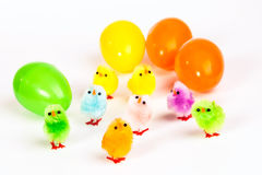 Easter chicken Royalty Free Stock Images