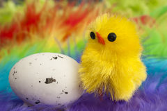 Easter chicken with egg. Easter chicken with speckled egg on colorful background of fluffy feathers royalty free stock photos