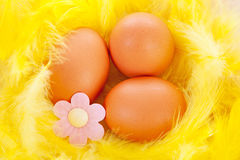 Easter chicken eggs Stock Image