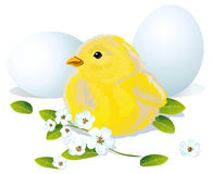Easter chicken and eggs Stock Photos
