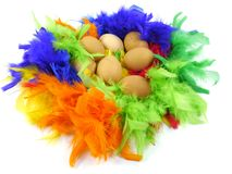 Easter chicken eggs in colorful feathers. Easter boiled chicken eggs lying in feathers in many colors stock photos