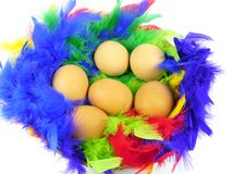 Easter chicken eggs in colorful feathers. Easter boiled chicken eggs lying in feathers in many colors royalty free stock photo