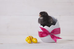 Easter chicken, eggs and decoration on white background Stock Images
