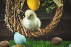 Easter chicken, eggs and decorations Stock Photos