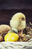 Easter chicken, eggs and decorations Royalty Free Stock Photos