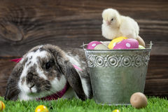 Easter chicken, eggs and decorations Royalty Free Stock Photo