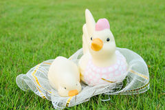 Easter, Chicken family in the net Royalty Free Stock Photography