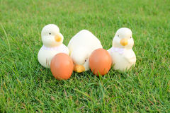 Easter, Chicken family in the net Stock Photos