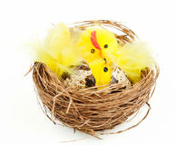 Easter chicken and hen bird's nest Royalty Free Stock Photo