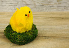 Easter chicken in the nest on wooden background Stock Images