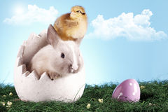 Easter chicken and rabbit! Royalty Free Stock Image