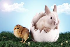 Easter chicken and rabbit! Stock Photo