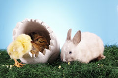 Easter chicken and rabbit! Royalty Free Stock Photos