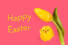 Easter chicken and tulip on a pink background Stock Photos