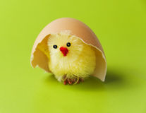 Easter chicken under egg shell Royalty Free Stock Photos