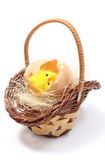 Easter chicken in wicker basket and broken eggshell Royalty Free Stock Photography