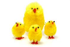 Free Easter Chickens Royalty Free Stock Photography - 606397