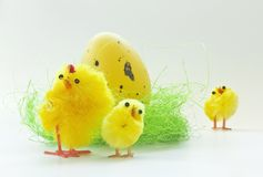 Easter chickens Stock Photo