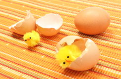 Easter chickens with broken eggshell and fresh egg Royalty Free Stock Photography
