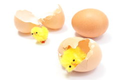 Easter chickens with broken eggshell and fresh egg Stock Photo