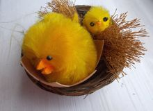 Easter chickens. Easter toys: yellow, fluffy chickens hatching stock photos