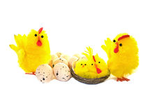 Easter chickens and eggs on white Royalty Free Stock Photo