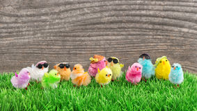 Easter chickens Funny travel holidays background Stock Images