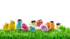 Easter chickens Funny travel holidays concept Royalty Free Stock Photo