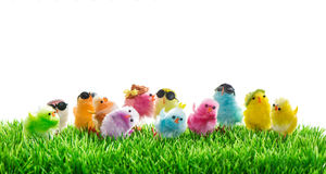 Easter chickens in green grass Royalty Free Stock Photography