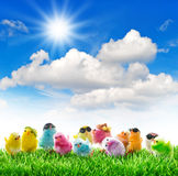 Easter chickens in green grass sunny blue sky Stock Photo