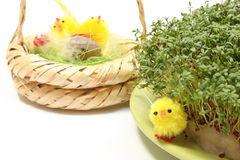 Easter chickens and green watercress on cotton pad Stock Images