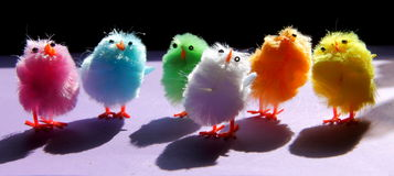 Easter chickens. Lovely pastel coloured fluffy Easter chickens Stock Photos