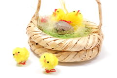 Easter chickens in wicker basket on white background Royalty Free Stock Photo
