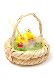 Easter chickens in wicker basket on white background Stock Images