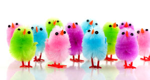 Free Easter Chicks Stock Images - 12967844