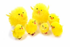 Easter chicks. Yellow synthetic chicks family isolated on white background Stock Image