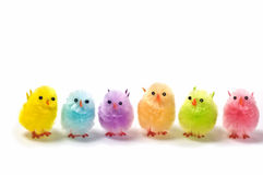 Easter chicks. Multi colored synthetic chicks isolated on white background Stock Image