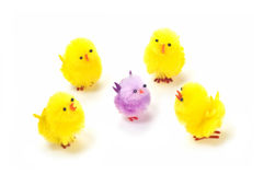 Easter chicks. Multi colored synthetic chicks isolated on white background Stock Images