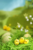Easter chicks stock photography