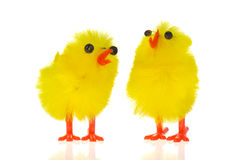 Easter chicks Royalty Free Stock Photo