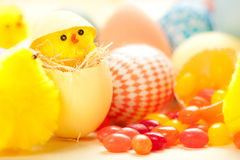 Easter Chicks Stock Images