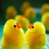 Easter Chicks Royalty Free Stock Images