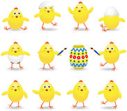 Easter chicks Stock Photo