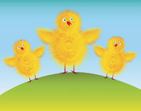 Easter chicks. Cartoon easter chicks theme illustration Royalty Free Stock Photo