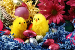 Free Easter Chicks Royalty Free Stock Photos - 5618298