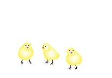 Easter chicks. On white background with copy space. Available as vector or jpg Royalty Free Stock Photography