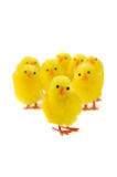 Easter chicks Royalty Free Stock Photography
