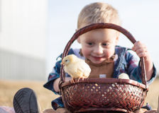 Easter Chicks in a Basket. Little boy on an Easter egg hunt with chicks and eggs in his basket Royalty Free Stock Photos